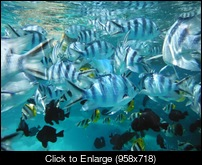 bora bora lagoon excursion 2.JPG